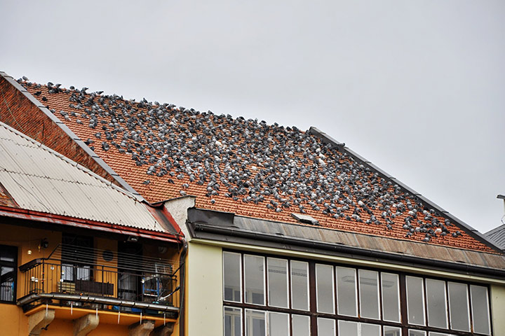 A2B Pest Control are able to install spikes to deter birds from roofs in Belgravia.
