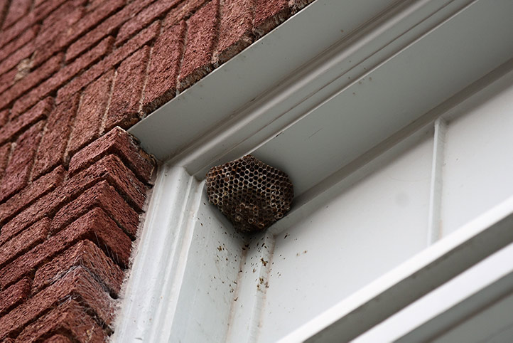 We provide a wasp nest removal service for domestic and commercial properties in Belgravia.